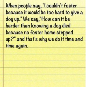 Difference Between Fostering And Adopting A Dog